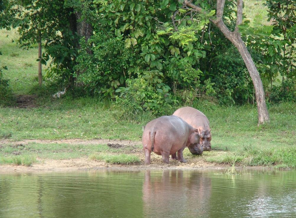 Lago de los Hipopótamos Hacienda Nápoles