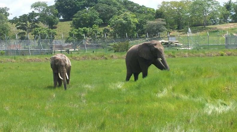 santuario-de-elefantes.png